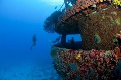 Did you know that Aruba is considered one of the best wreck diving destinations in the Caribbean? #aioutlet #aruba