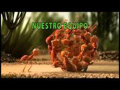 Trabajo en equipo y motivación hormigas - YouTube