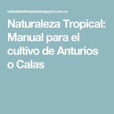 Naturaleza Tropical: Manual para el cultivo de Anturios o Calas