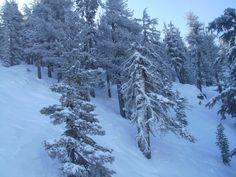 Tree Skiing at Sierra-at-tahoe