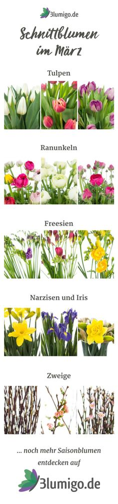 Which flowers are available in March? Cut flowers season calendar - Home Page Season Calendar, Calendar Home, March Month, Daily Health Tips, Seasonal Flowers, Lots Of Money, Wedding Beauty, Cut Flowers, Flower Decorations