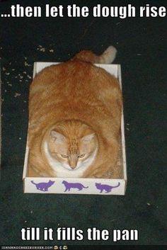 Fat cat fills the box
