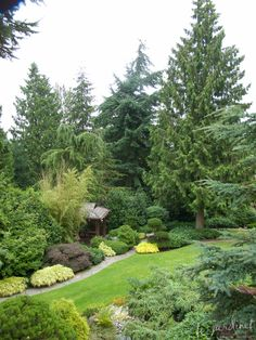 lovely conifers and garden