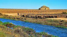 Usuario: candi (España) - Pastor por el río Guadiana. - Tomada en Argamasilla de Alba el 15/12/10