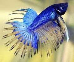How I made a difference to neglected Betta Fish