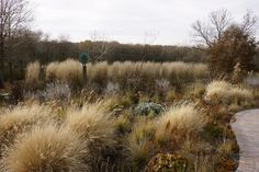 Love the look of grasses as they transition into fall