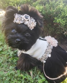 Yorkie Dogs, Yorkies, Puppies, Cute Funny Animals, Cute Dogs, Puppy Cuddles, Doggy Stuff, Classy Aesthetic, Gif Animé