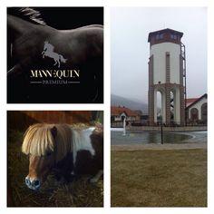 a quick visit to Masarykov Dvor - most pretty mini shetty . Equestrian Style, Squares, Horses, Mini, Pretty, Instagram Posts, Animals, Animales, Bobs