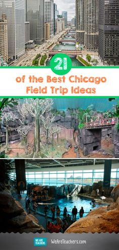 21 of the Best Chicago Field Trip Ideas - WeAreTeachers Brookfield Zoo, Classroom Teacher, Chicago Area, Outdoor Learning, Medieval Times, Field Trips, Science Lessons, Teaching Math, Fun Activities