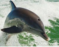Please don't grant permission for the construction of any dolphinariums! http://www.thepetitionsite.com/551/494/192/please-dont-grant-permission-for-the-construction-of-any-dolphinariums/# @SeaShepherd #defendconserveprotect