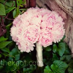 Peonies are my fave!