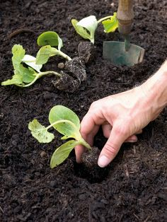 working with soil