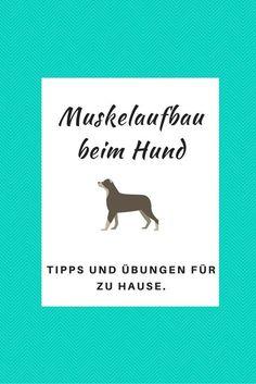 Muskelaufbau beim Hund - Tipps und �bungen für zu Hause.