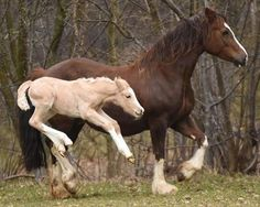 Foal leaping with joy!