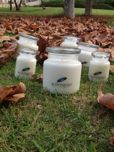 It is going to be a chilly night, time to get toasty with our warming Bowerbird Collector Natural Soy candle in Vanilla Bean 100+ hours burn time for $29.00 30+ hours burn time for $19.00 Http://bowerbirdcollector.com.au/