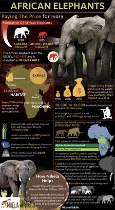 The illegal ivory trade is not the only reason the iconic African Elephant populations are declining at alarming rates. African Elephant Facts, Asian Elephant, Elephant Love, Elephant Art, African Animals, Elephant Quotes, All About Elephants, Save The Elephants, Baby Elephants