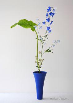 Shoka shimputai – maivan.flowers