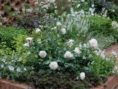 Awesome Garten Bodendecker Polsterstauden Garten Bodendecker Rosen Ideen
