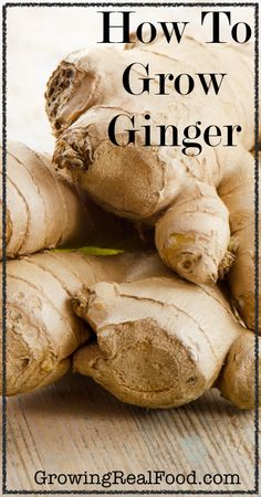 How to grow ginger | GrowingRealFood.com