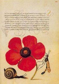 Mira Calligraphiae Monumenta - Joris Hoefnagel, Flemish illustrator, 16th century
