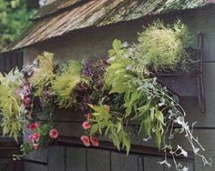 """Its a chicken feeder on the wall, so good for my """"hens & chicks"""" (plants) """")"""