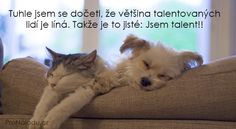 388-talent Cats, Feng Shui, Animals, Psychology, Gatos, Animales, Animaux, Animal, Cat