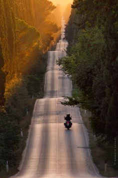 Bolgheri, Tuscany, Italy -- motorcycle rider on a cypress-lined road