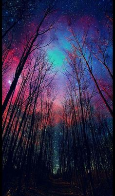 Gorgeous night forest