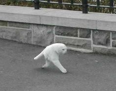 Two legged Ninja cat      - Some how escapes and no one noticed.