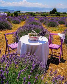 2670 Best beautiful Lavender images   Lavender, Lavender ... Rain Garden Designs Neska on