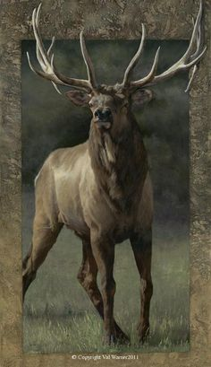 Bordered Canvas Giclees by Val Warner 6 Elk Images, Elk Pictures, Farm Paintings, Animal Paintings, Large Animals, Animals And Pets, Magnificent Beasts, Bull Elk, Animal Art Prints