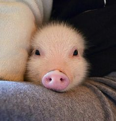 wanna kiss u lil piggy:)