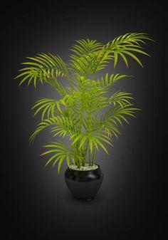 fern green vase in black pot on black gradient background