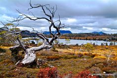 The Overland Track, Cradle Mountain, Tasmania, Australia