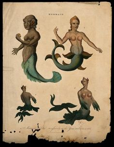 The Image of the Mermaid | What do Mermaids Look like? The Image of the Mermaid by Sorita d'Este Real Mermaids, Mermaids And Mermen, Fantasy Mermaids, Vintage Mermaid, Mermaid Art, Mermaid Paintings, Tattoo Mermaid, Mythical Creatures, Sea Creatures
