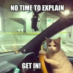 If my cat started talking and was driving I would so get in the car lol.