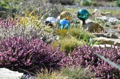 Garden Design, Globe, Plants, Farmhouse, Speech Balloon, Landscape Designs, Plant, Planets, Yard Design