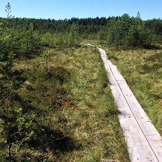Isosuon pitkoksilla #venlojenvaellus #elämysliikuttaja #pitkokset #luonto…
