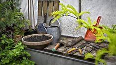 Potatura invernale della vite allevamento a Guyot  http://giardinierevalente.blogspot.it/2015/11/potatura-invernale-della-vite.html