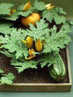 The Miniature Garden: The Vegetable Garden