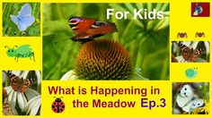 For Kids: What is Happening in the Meadow -Ep.3: Butterflies with Beauti...