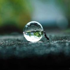 ant pushing drop of water