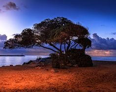 lone tree by Hugh Mobley on 500px
