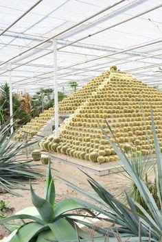 JOELIX.com | Cactus Oase Ruurlo