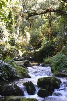 River in the quaint mountain town of San Gerardo de Dota. This is a wonderful destination for hiking, birdwatching, and enjoying nature. More info on planning your visit here: http://www.twoweeksincostarica.com/san-gerardo-de-dota-hideaway-in-cloud-forest/