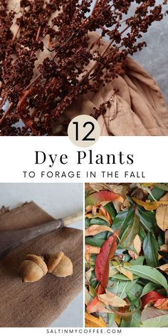 Natural Dye Fabric, Natural Dyeing, Herbal Remedies, Natural Remedies, How To Dye Fabric, Dyeing Fabric, Earth Pigments, Textiles, Nature Crafts