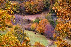 Los bosques de Sajambre, Picos de Europa, León