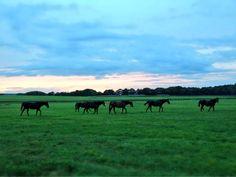 日高にきて最初の仕事は中期育成でした。 一歳馬はこれまで扱ってきたどの馬より反応が瑞々しくて感激したのを覚えています。 立ち上がった馬の下敷きになり、場長にこっ酷く叱られた事も そして何より心が躍ったのが 放牧地での自然な姿でした。
