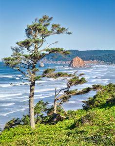 by janusz on flickr ~ Cannon Beach Oregon Coast*