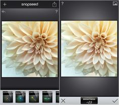 Flowerona Tips: My favourite photo editing app…Snapseed